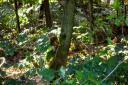 Eichhörnchen :: Sciurus vulgaris
