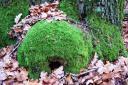 Eine grüne Wohnung…¦