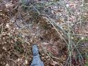 Hier hatte das Wildschwein seine Liegestatt - gut verborgen hinter einem Gestrüpp am Waldrand