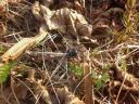 Dieser Käfer ist wohl den Ameisen ins Gehege gekommen…¦auch die sechsbeinigen Krabbler sind wieder aktiv!