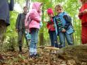 Für die großen Pilze, die jetzt überall im Wald stehen, brauchte man aber keine Lupe!