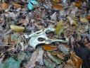Fundstücke auf dem Weg zur Wildtierkamera…¦