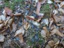 Bild 4 ? Unter einer großen Kiefer lagen Unmengen kleiner, flauschiger grau-schwarzer Federn. War dem Vogel zu warm und er hat sie abgeworfen? Oder was ist da passiert?
