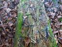 Bild 7 ? Auf diesem Baumstamm lagen ausgerupfte schwarz-weiß gemusterte Federn und kleine Knöchelchen. Zu welchem Vogel gehören sie wohl?
