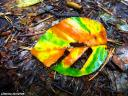 die ersten Blätter fallen…¦