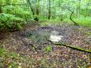 Und die vielen Bombenkrater im Offenbacher Stadtwald werden bei solchem Wetter zu beliebten Wildschwein-Suhlplätzen