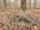 Ein Malbaum - Wildschwein Wellness und Nachrichtenbaum in einem…¦