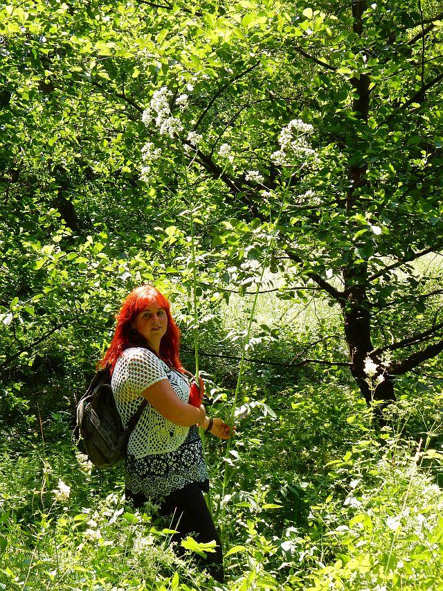 Simone neben einer risiegen Baldrianpflanze, die sie bei weitem überragt